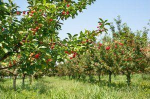 Вносить удобрения лучше осенью
