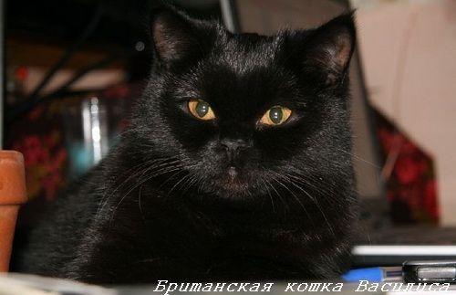 mačići crne boje