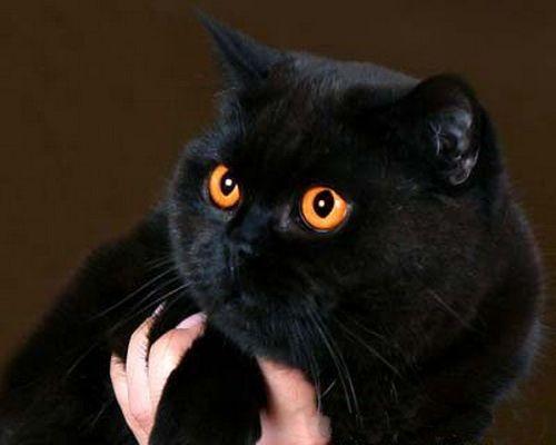 crne mačiće