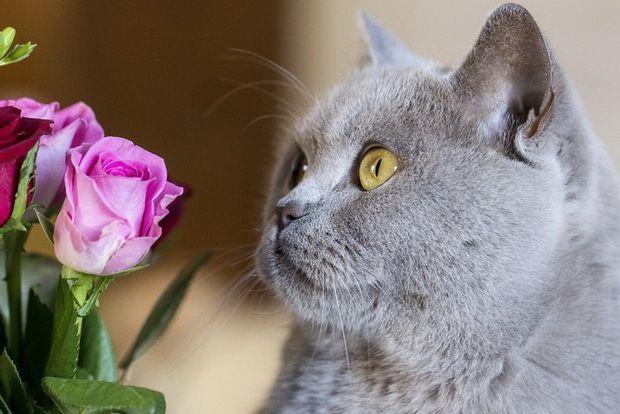 Šta da radim ako je mačka je otrovan