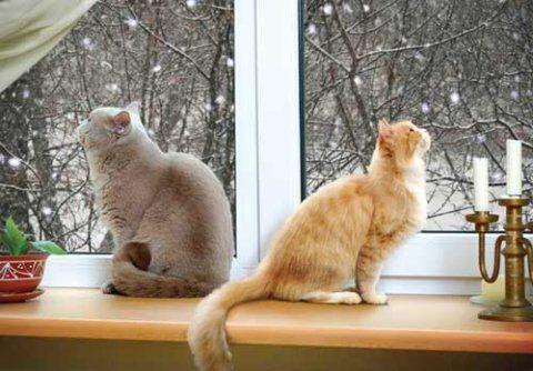 Что делать, если ваша кошка просит кота? Советы и средства