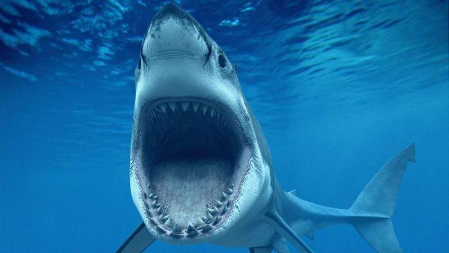 Sharks - užas i obmane dubina vode.