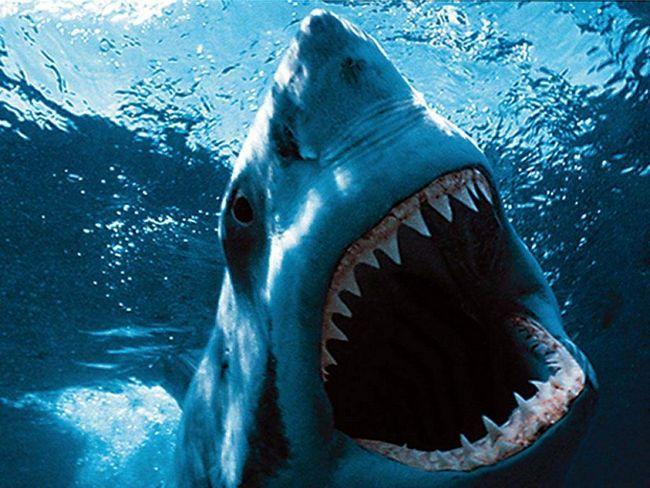 Shark Attack - najstrašnije oružje ove ribe.