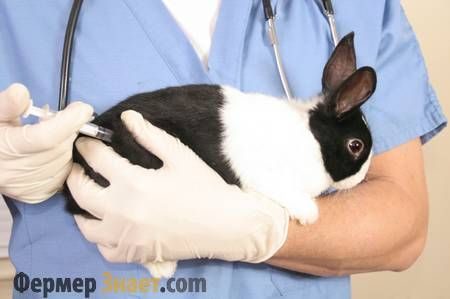 Укол кролику