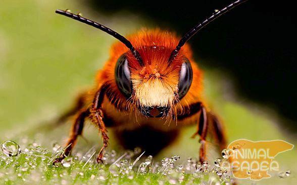Včelí med.