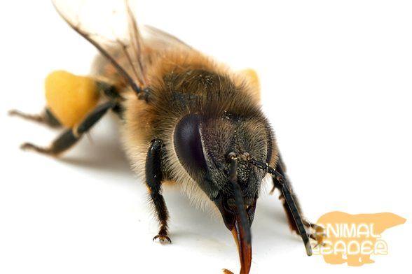 Bee - úžasné zviera.
