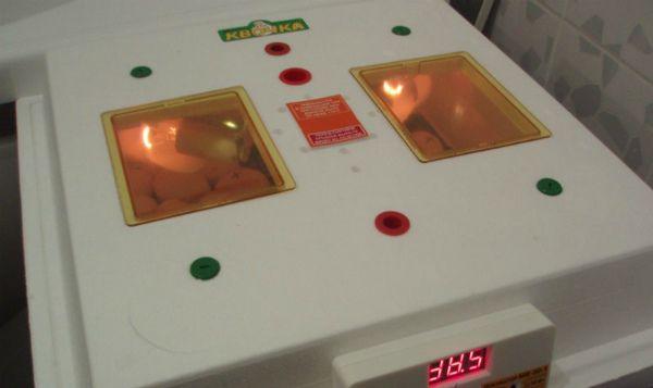 Inkubacija jaja u uređaje za domaćinstvo i quot; Kvochka & quot;
