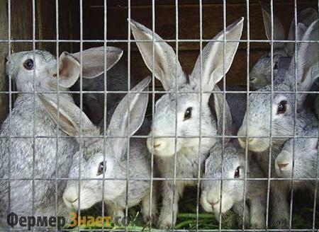 Что следует обязательно знать о выращивании кроликов