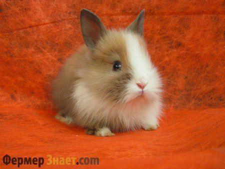 Что следует знать о карликовых кроликах