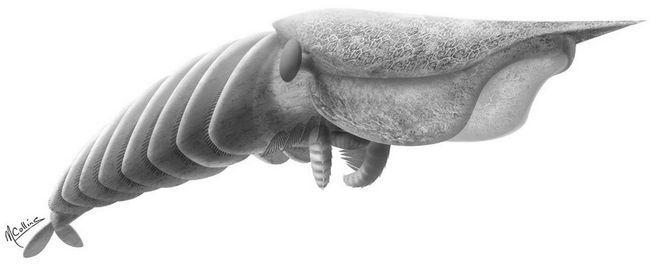 Ancient škampi su imali peraje umjesto kandži.