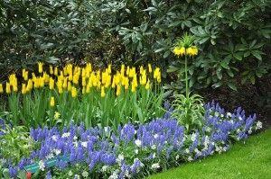 Cvijet krevet od tulipani