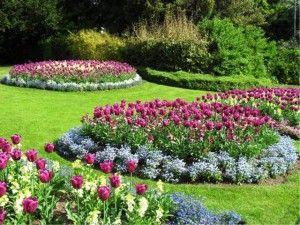 Tulipani, cvjetnjak