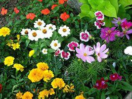 Cvjetnjaci godišnjih cvijeća