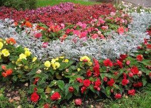 Cvijet vrt od godišnjaci