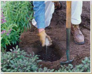 Удобрения содержат питательные вещества, нужные деревцу