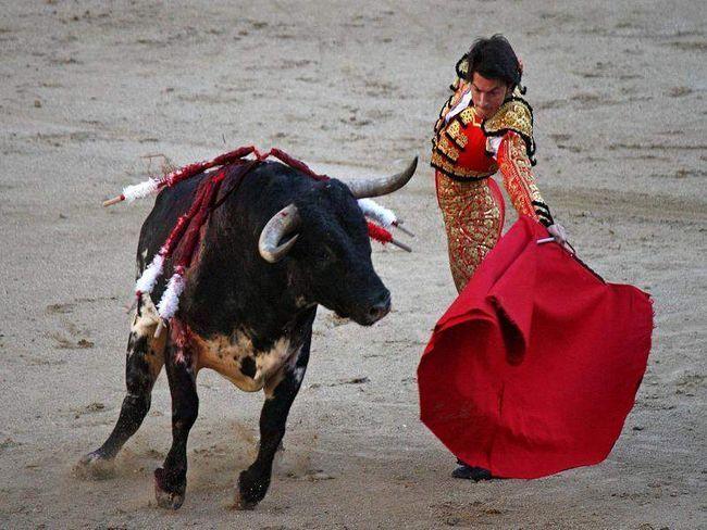 Bullfighters teasing bikova crvenu tkaninu, koja se zove kapuljačom.