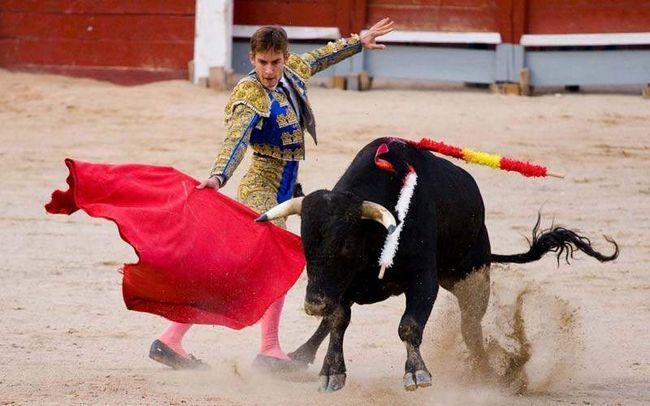 Bikovi su agresivni u odnosu na crvenu krpu, koji je matador mašući pred njihovim očima.