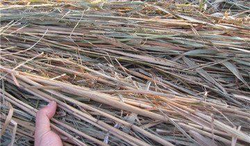 Fotografie bambus stopky pre kolíky, ALL.BIZ
