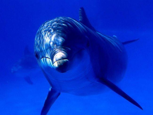 Delfin špijun primećen u vodama u blizini Pojasa Gaze.