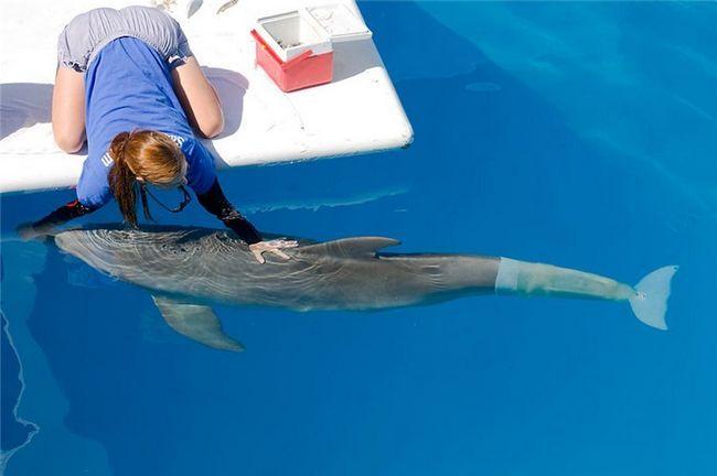 Дельфин Винтер – первое бионическое морское существо, которое двигается с помощью искусственного хвоста.