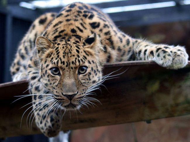 Десять самых редких животных на земле