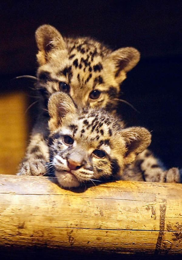 Mladi divlje životinje