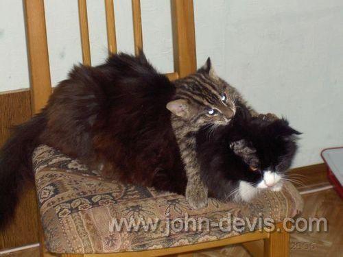 Djetinjstvu cat-ribar po imenu John Davis