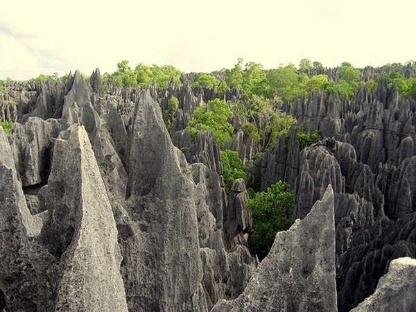 Wildlife Madagaskar