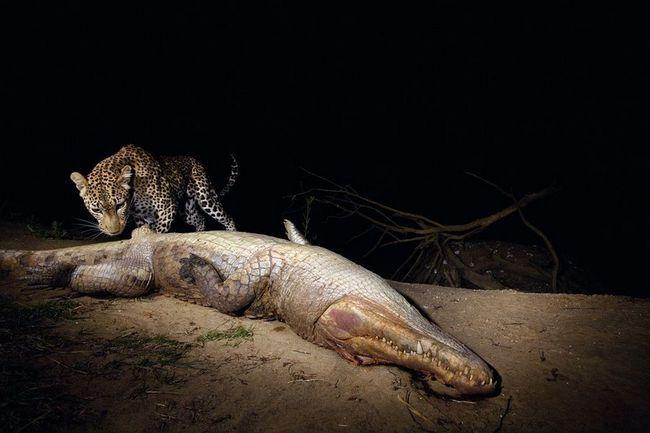 I na ovoj fotografiji tigra odlučio