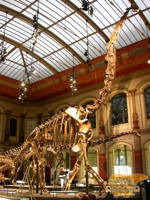 Brachiosaurus - najveći biljojeda dinosaura