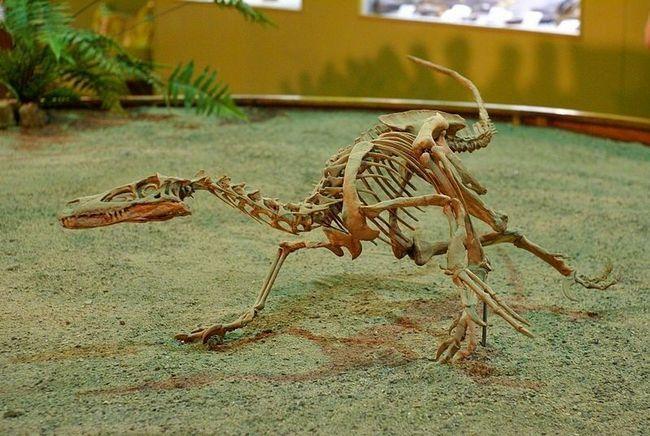Velociraptor kostur