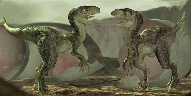 Tako je ovdje i pogledao oko sebe mlade Velociraptor