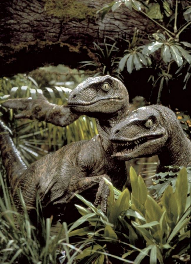 Par Velociraptor vreba u gustoj travi