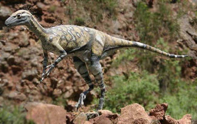Mali dinosaurus Eoraptor lunensis.