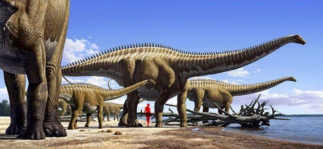 Dinosauri sauropodi.