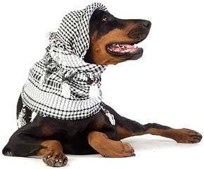 Доберманы пинчеры. Характер, общее описание собаки, дрессировка и содержание.