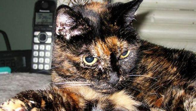 U SAD-u, na 28. godini života umro je u najstarija na svijetu mačka