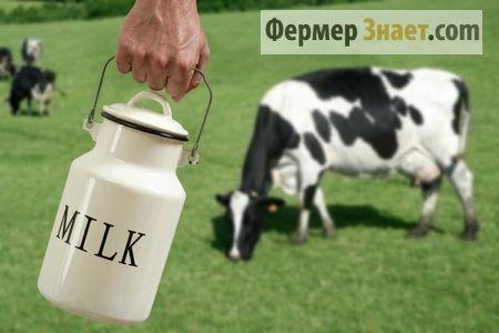 Доим корову сами: все что стоит об этом знать