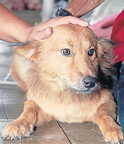 Pes Pully nalezeno myl na skládce dítěte v Thajsku (foto: bangkokpost.com)