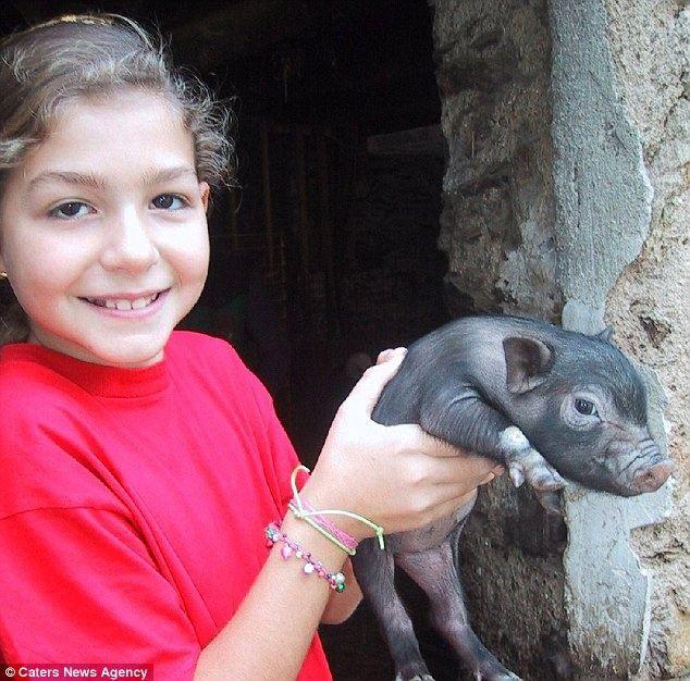 Home oblíbený 70-kilogram černý prase jmenoval Chesira