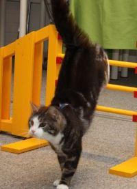 mačke trening