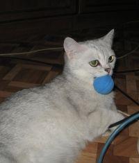 trening mačke kod kuće