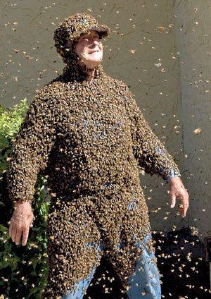 trener pčele
