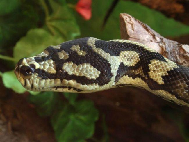 Змеи тоже боятся упасть с дерева