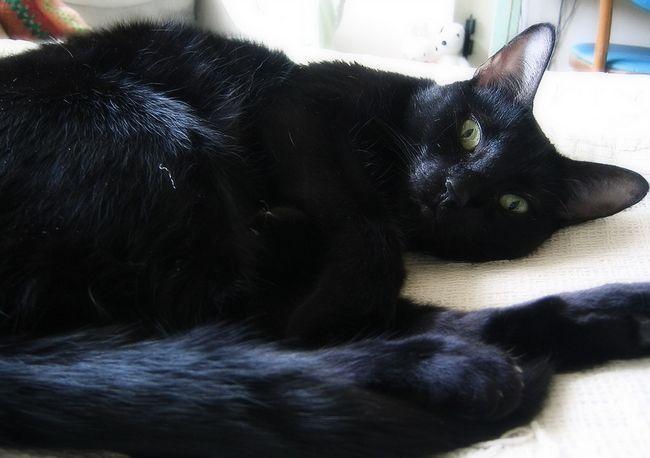 Дронтал для кошек: инструкция по применению