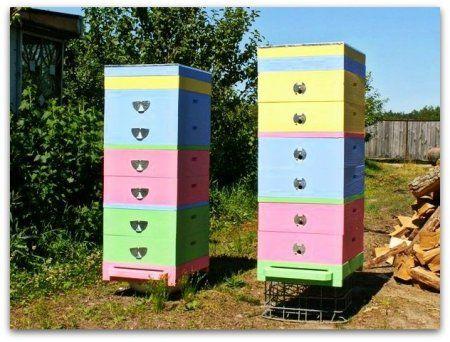 Двухкорпусное содержание и многокорпусное содержание пчел
