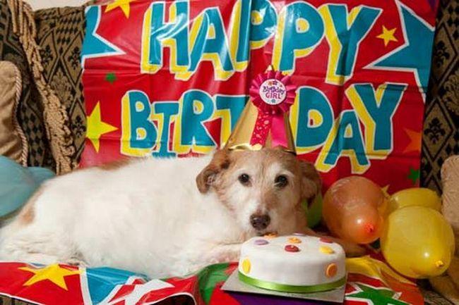 Na dan psa proslavio svoj 22. rođendan