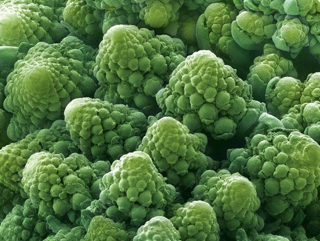 Food pod mikroskopem