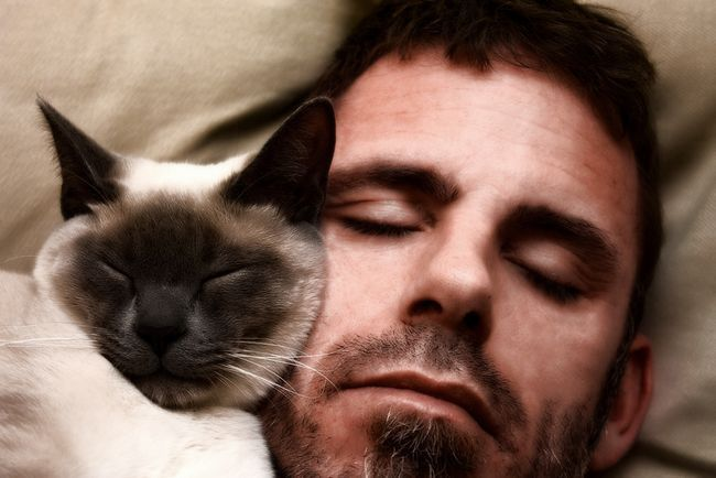 Ako je mačka spava u svom krevetu, šta to znači?
