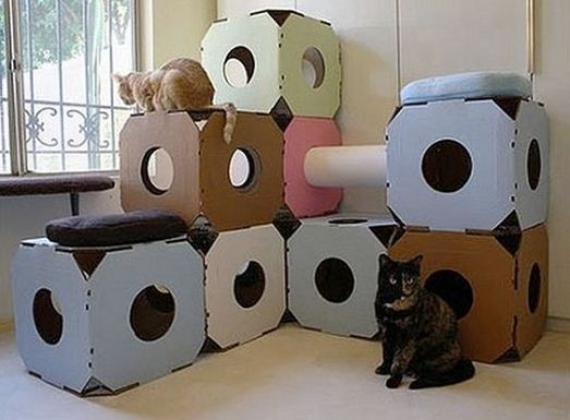 Kako mogu zadržati nekoliko mačaka u kući
